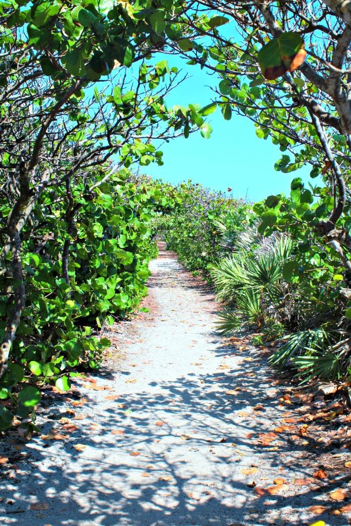 sea grape path at Blowing Rocks Preserve